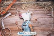 DellStampede2019-0046-PRINT